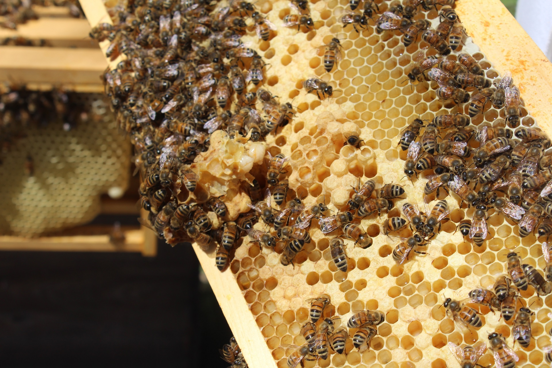 bee hive frames featured