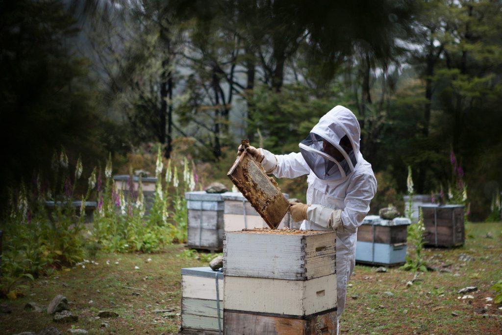 beekeeper looking bee hive