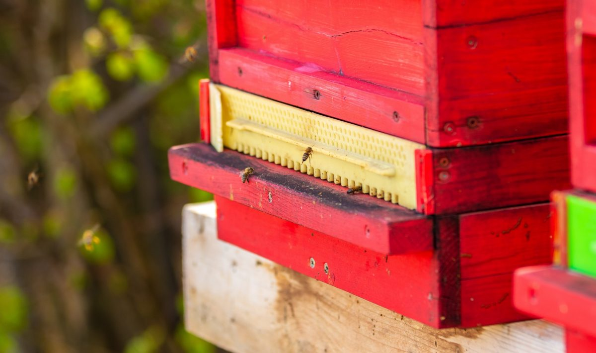 build a bee box featured