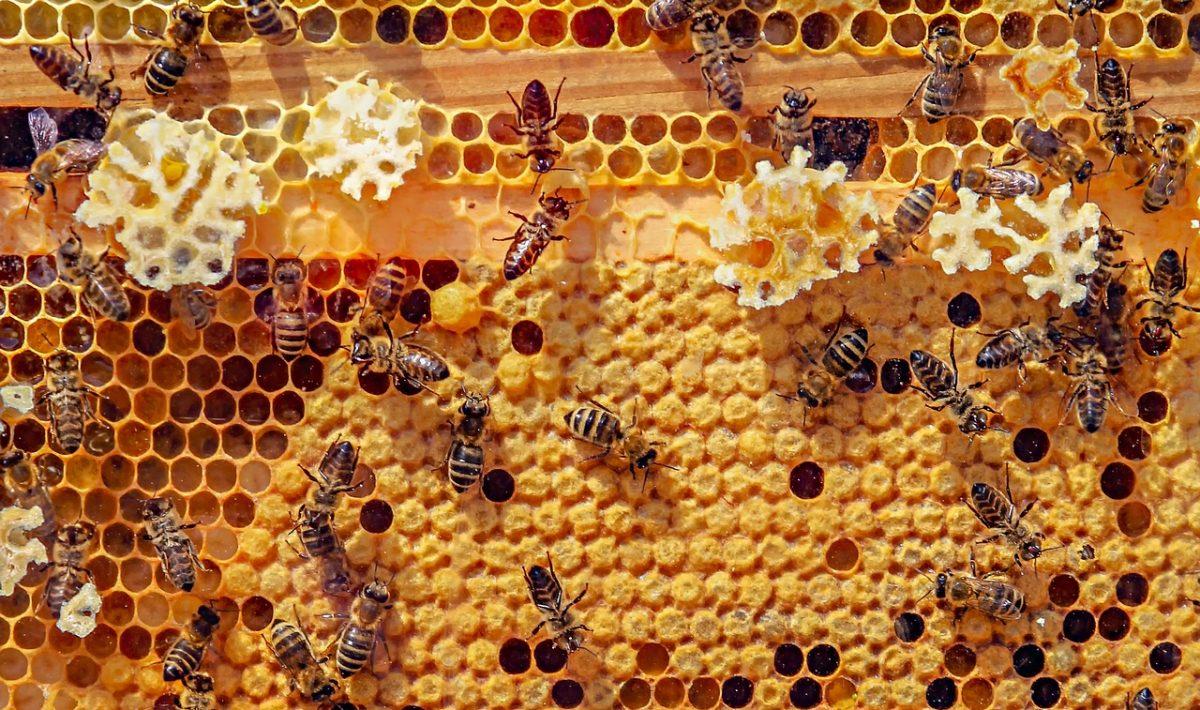 20 Frame Beehive Kit Metal Roof Deep /& Medium Box Honey Keeper House Langstroth