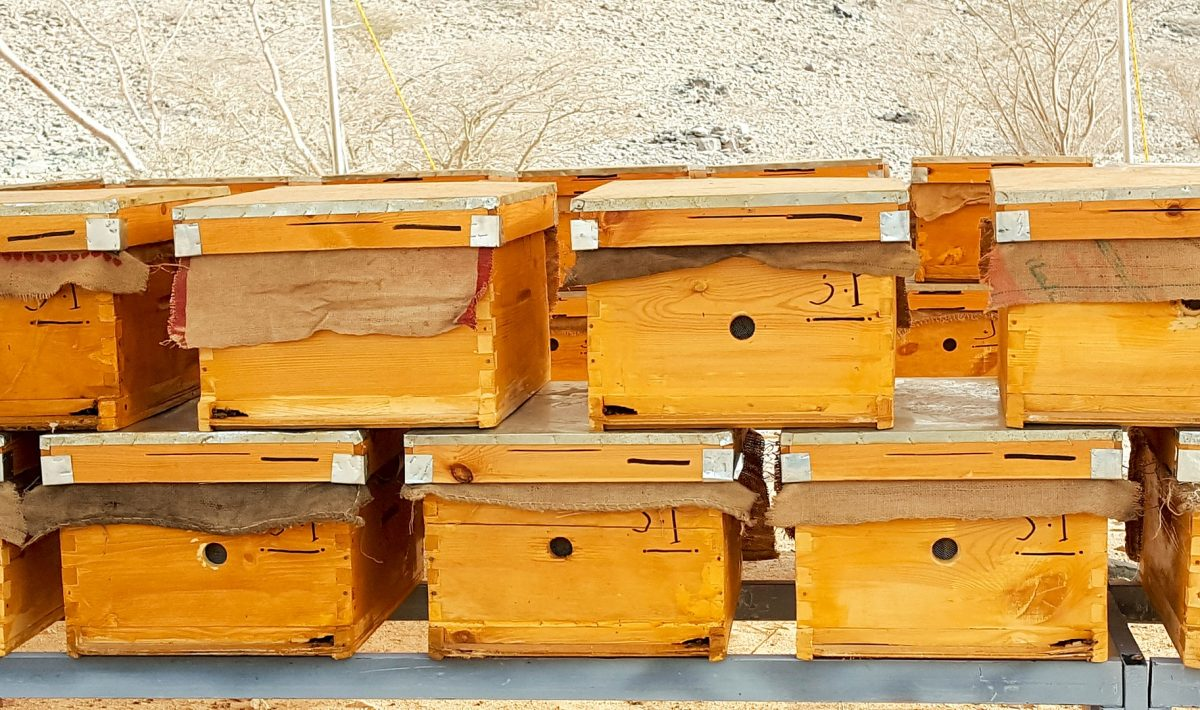 Cedar Roof Up Grade Top Bar Hive Bee Keeping Hive Large or Medium