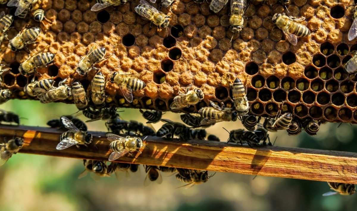 What Are The Advantages Of Beekeeping Complete Beehives