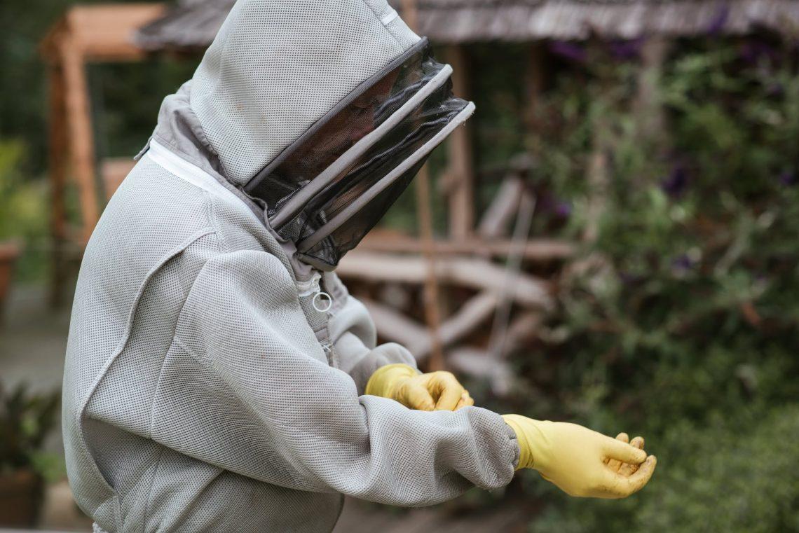 crop man putting on gloves before harvesting honey