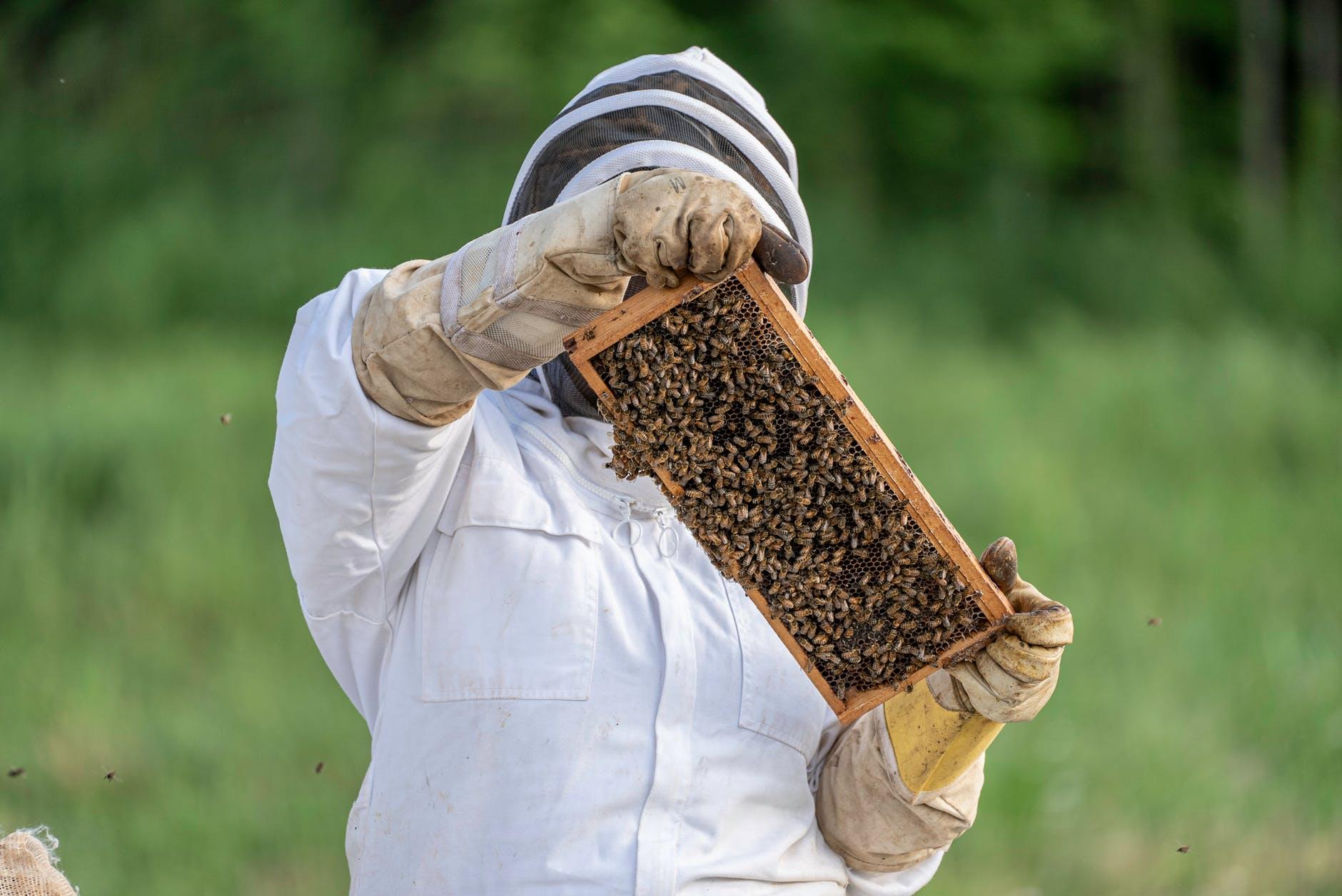 people summer honeycomb grass