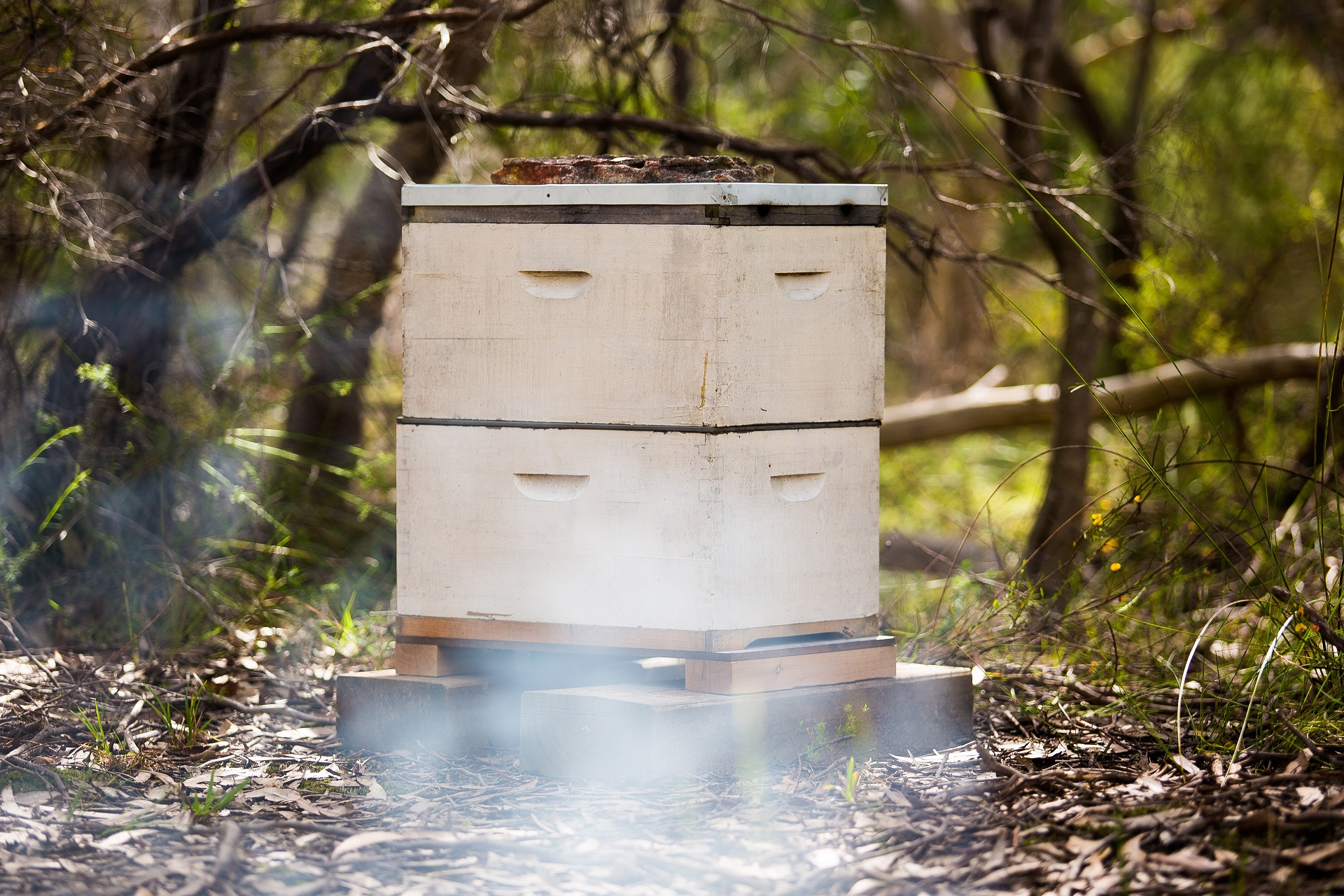 build a bee hive from scratch featured